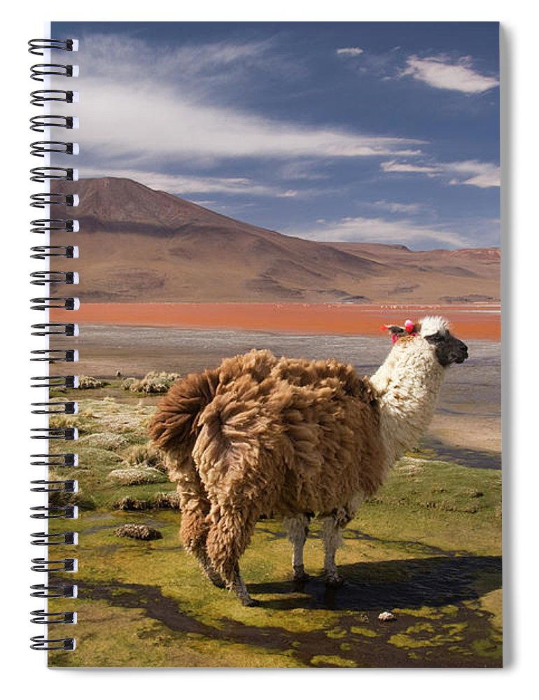 Scenics Spiral Notebook featuring the photograph Laguna Colorado Lake With Llama by John Elk