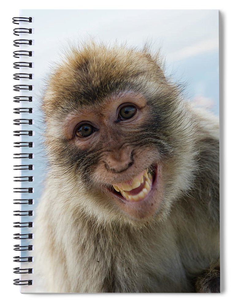 Alertness Spiral Notebook featuring the photograph Laughing Gibraltar Ape Barbary Macaque by Holger Leue