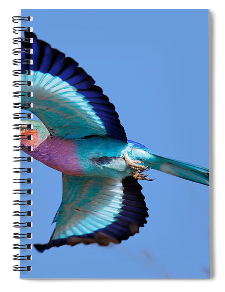 Lilac-breasted Spiral Notebook featuring the photograph Lilac-breasted Roller In Flight by Johan Swanepoel
