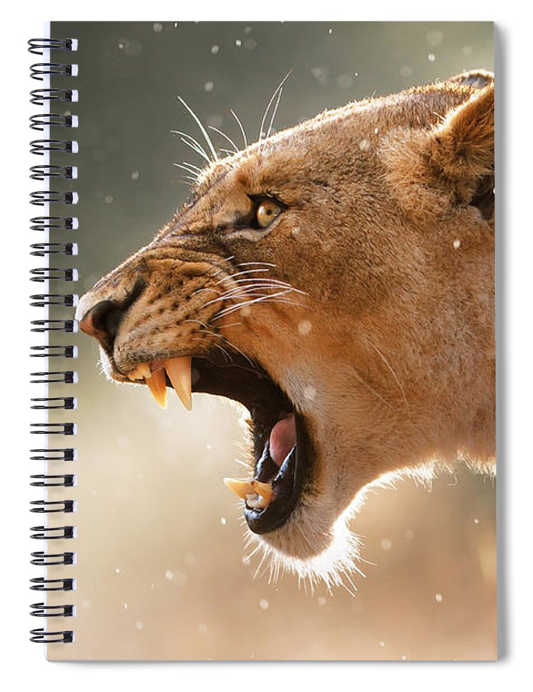 Lion Spiral Notebook featuring the photograph Lioness displaying dangerous teeth in a rainstorm by Johan Swanepoel
