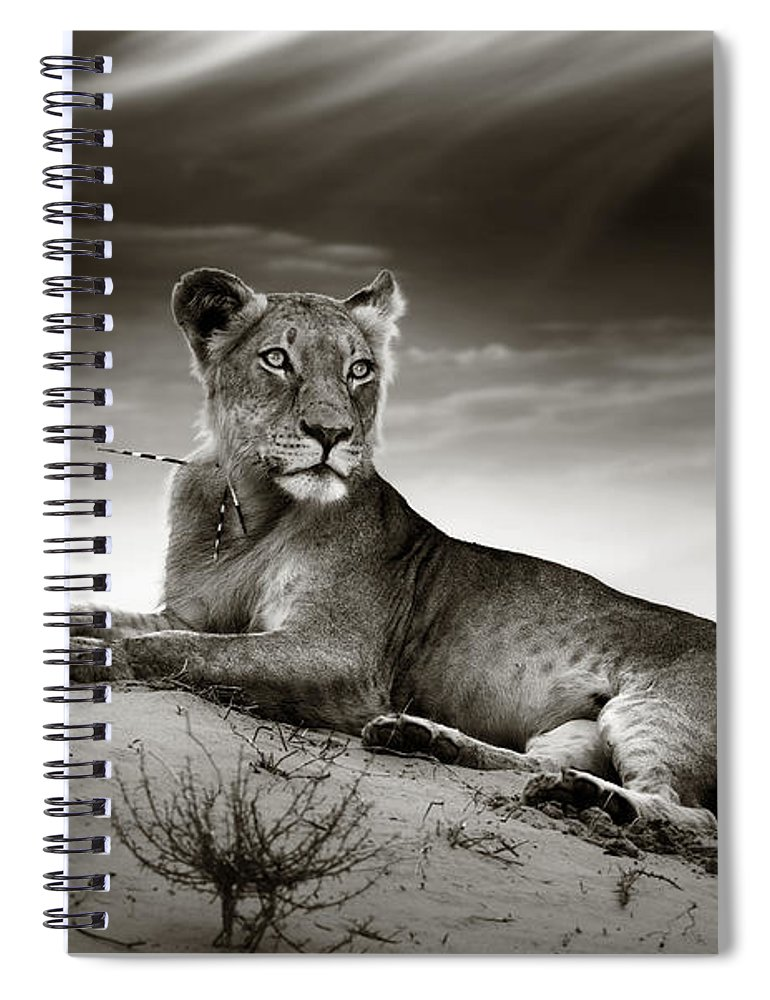 Lion Spiral Notebook featuring the photograph Lioness On Desert Dune by Johan Swanepoel