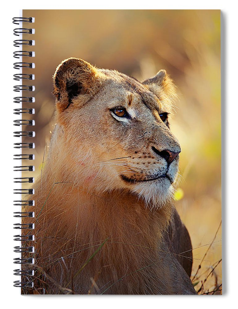 Lion Spiral Notebook featuring the photograph Lioness Portrait Lying In Grass by Johan Swanepoel