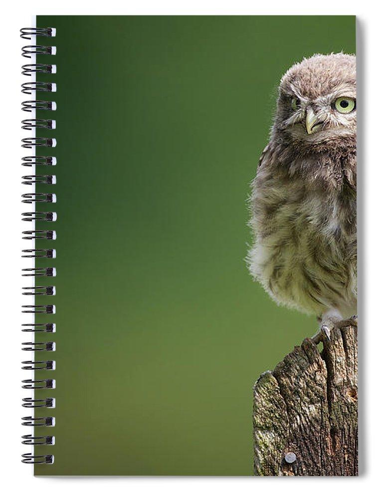 Owlet Spiral Notebook featuring the photograph Little Fuzzy by Markbridger