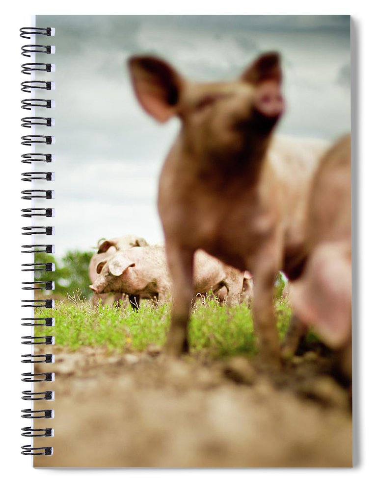 Pig Spiral Notebook featuring the photograph Little Pigs by Emmanuelle Brisson