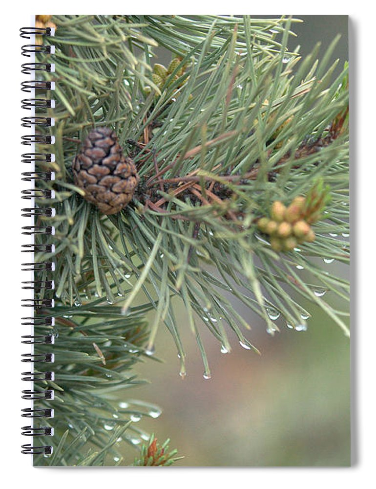 Pine Spiral Notebook featuring the photograph Lodge Pole Pine in the Fog by Frank Madia