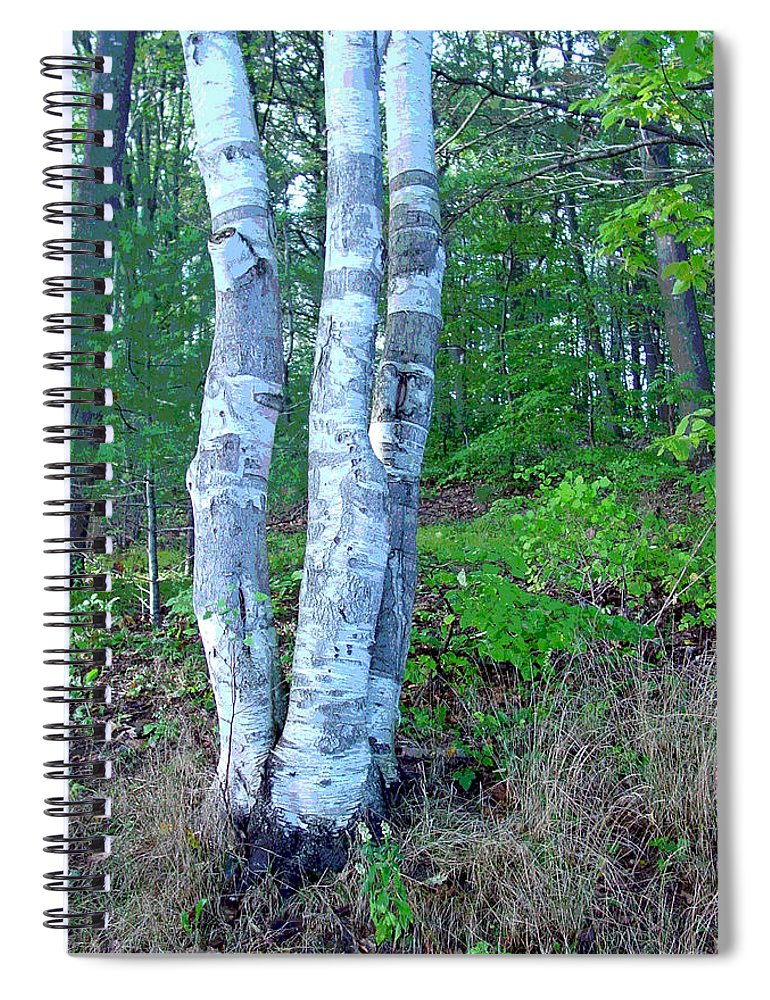 Birch Tree Spiral Notebook featuring the photograph Lone Birch in the Maine Woods by Suzanne Gaff