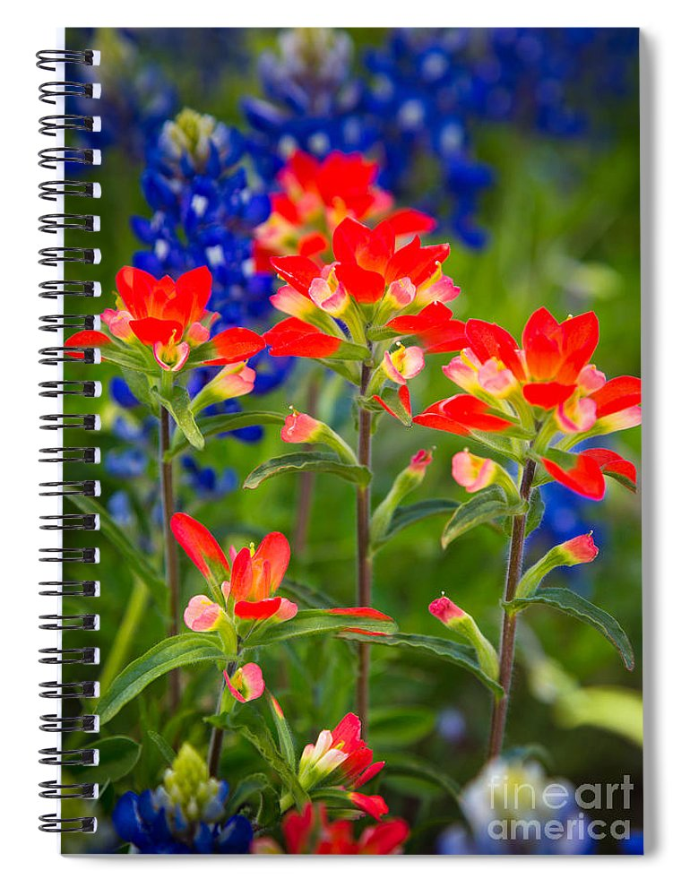 America Spiral Notebook featuring the photograph Lone Star Blooms by Inge Johnsson