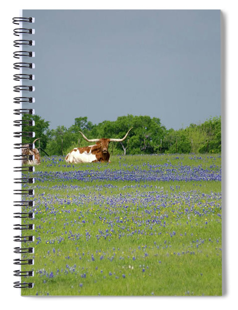 Horned Spiral Notebook featuring the photograph Longhorns And Bluebonnets by Linda Trine