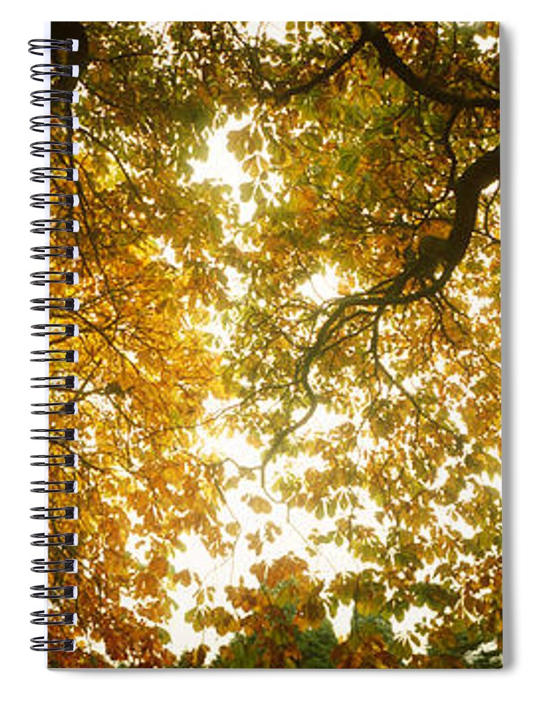 Photography Spiral Notebook featuring the photograph Low Angle View Of Autumn Trees by Panoramic Images
