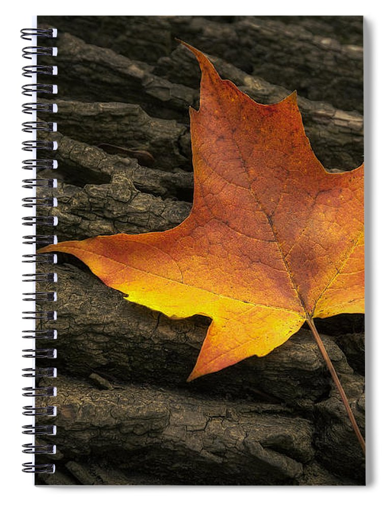 Maple Spiral Notebook featuring the photograph Maple Leaf by Scott Norris