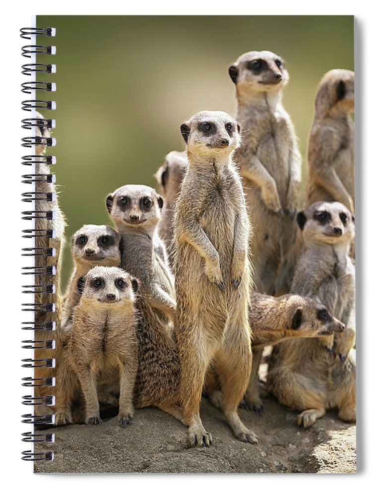 Scenics Spiral Notebook featuring the photograph Meerkat Family On Lookout by Kristianbell