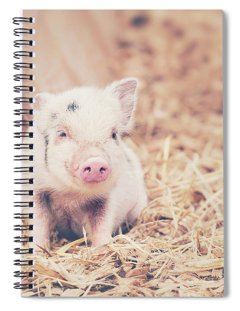 Pig Spiral Notebook featuring the photograph Micro Pig by Samantha Nicol Art Photography