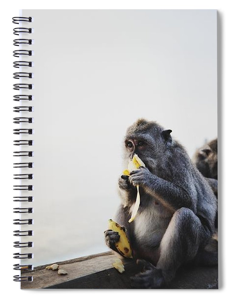 In A Row Spiral Notebook featuring the photograph Monkeys Eating Bananas by Carlina Teteris