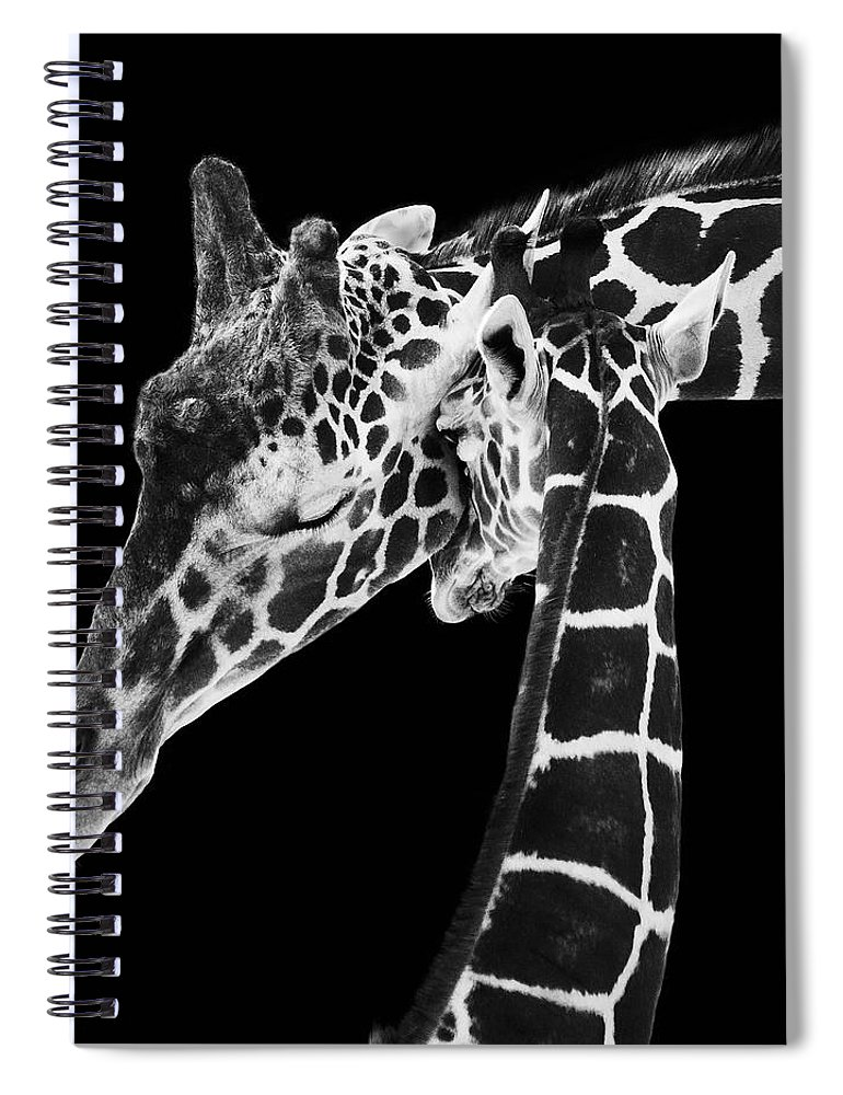 3scape Photos Spiral Notebook featuring the photograph Mother and Baby Giraffe by Adam Romanowicz