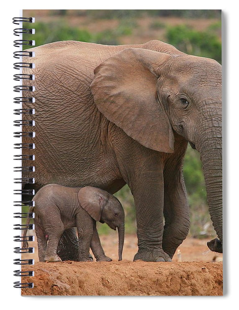 Elephant Spiral Notebook featuring the photograph Mother And Calf by Bruce J Robinson