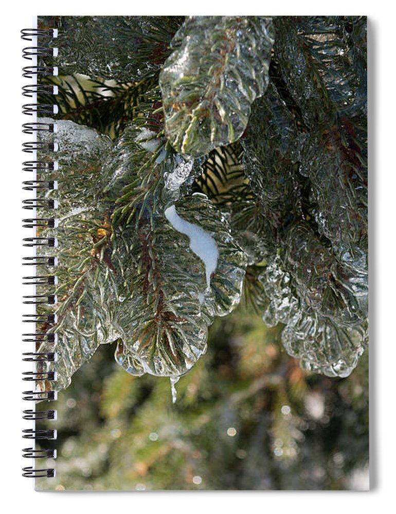 Mother Nature's Christmas Decorations - Pine Tree Branches ...