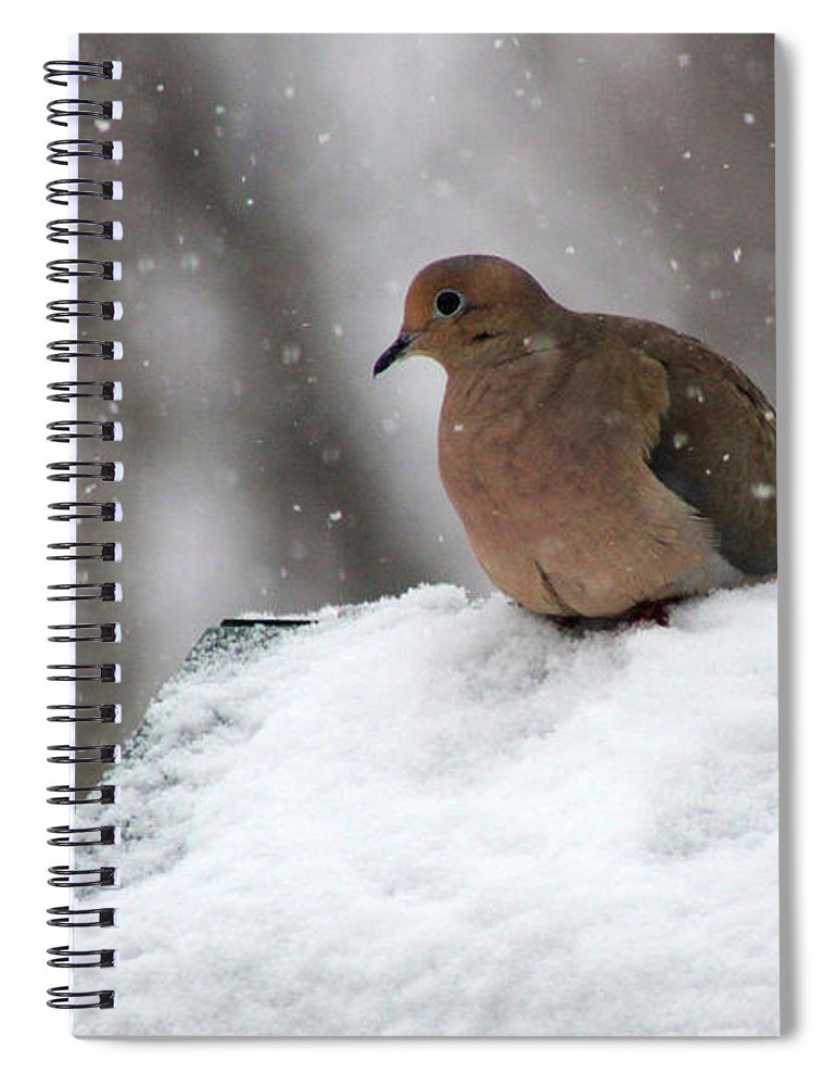 Mourning Dove Spiral Notebook featuring the photograph Mourning Dove In Snow by Karen Adams