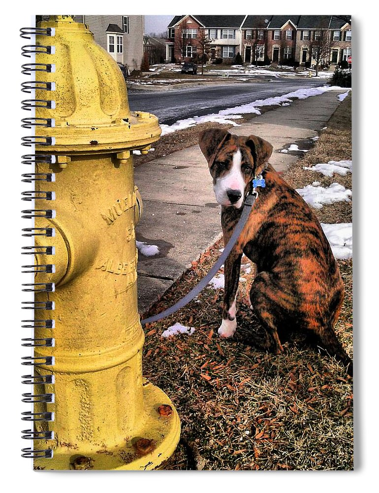 Dogs Spiral Notebook featuring the photograph My Friend Plug by Robert McCubbin