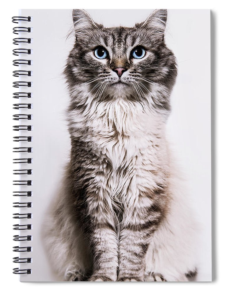 Pets Spiral Notebook featuring the photograph Neva Masquerade Cat In The Studio by Kevin Vandenberghe