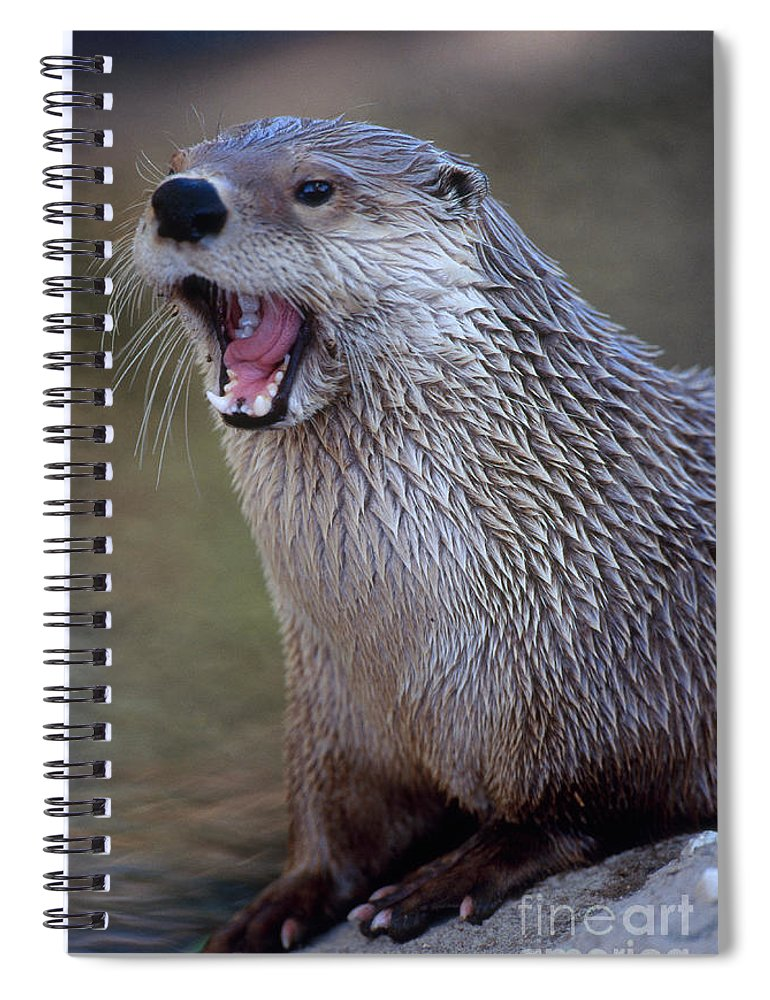 Northern River Otter Spiral Notebook featuring the photograph Northern River Otter by Art Wolfe