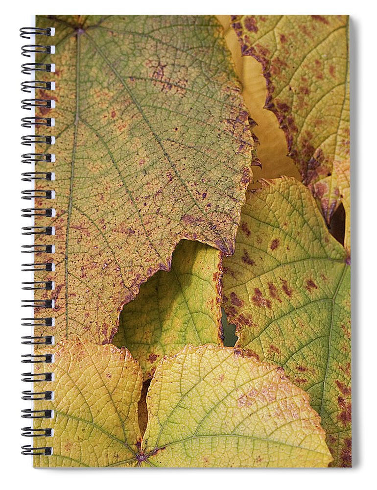Coin Spiral Notebook featuring the photograph Ornamental Vine by Kim Haddon Photography