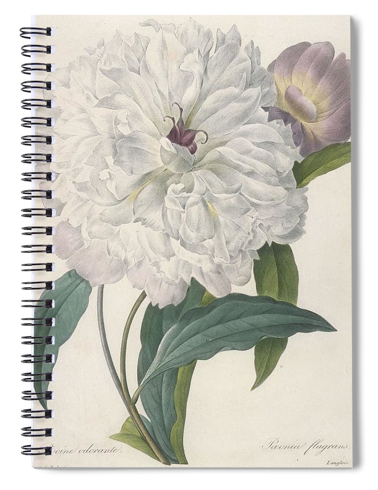 Redoute Spiral Notebook featuring the painting Paeonia Flagrans Peony by Pierre Joseph Redoute