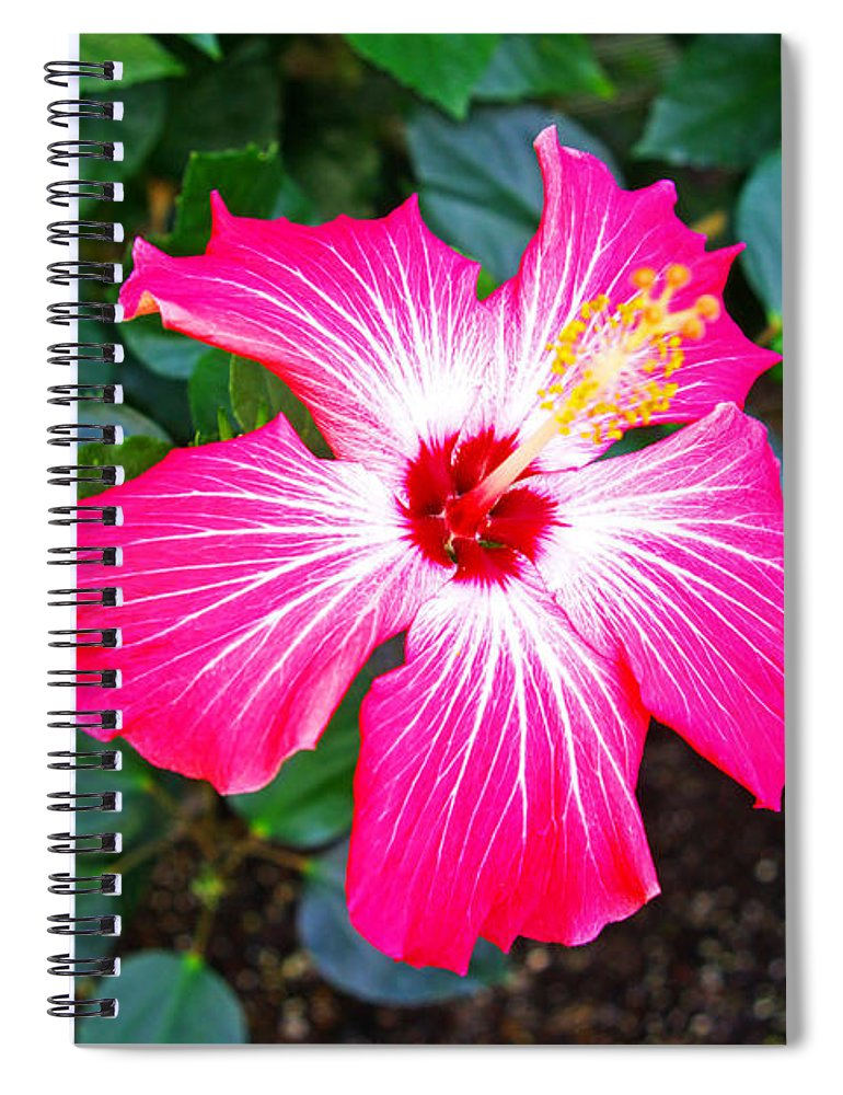 Painted Lady Hibiscus Spiral Notebook For Sale By Rich Walter