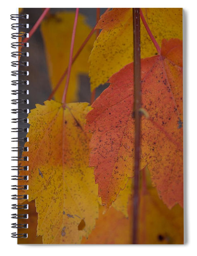 Salem Spiral Notebook featuring the photograph Pastel Colors Of Autumn by Jeff Folger