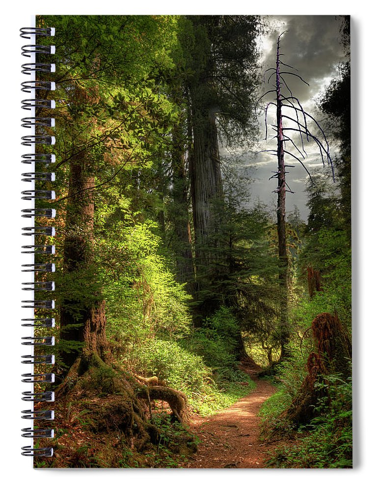 Tranquility Spiral Notebook featuring the photograph Path Through Redwood Forest by Ed Freeman