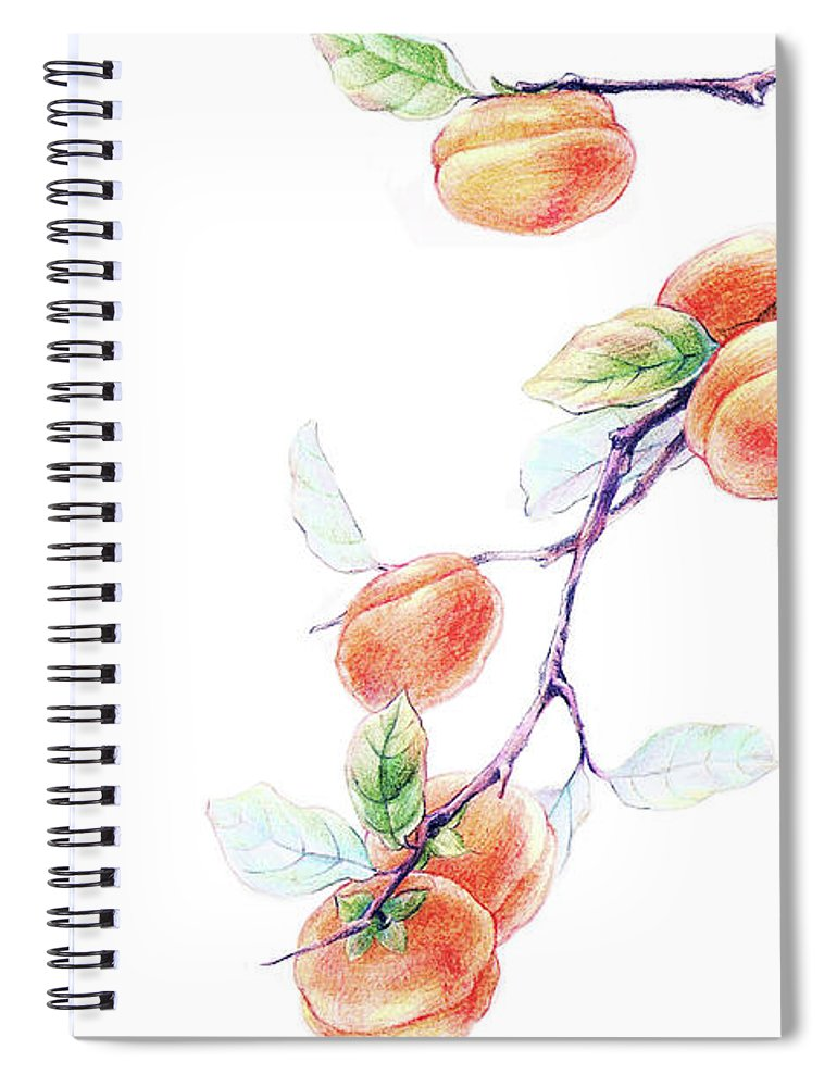 White Background Spiral Notebook featuring the digital art Persimmon Tree by Bji / Blue Jean Images