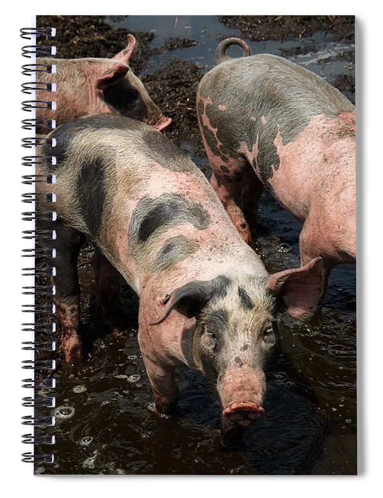 pigs in the mud spiral notebook for salenick biemans