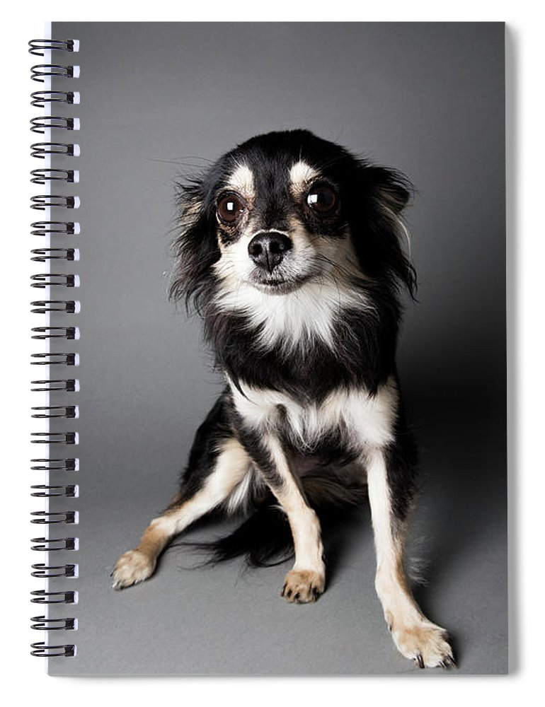Pets Spiral Notebook featuring the photograph Portrait Of A Chihuahua-papillon Mix - by Amandafoundation.org