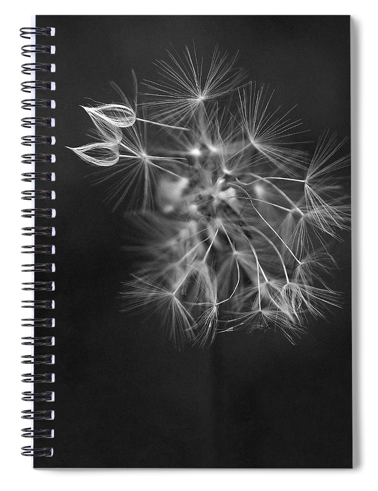 Dandelion Spiral Notebook featuring the photograph Portrait Of A Dandelion by Rona Black