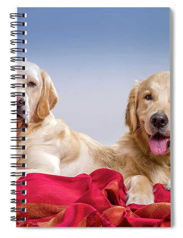 Photography Spiral Notebook featuring the photograph Portrait Of A Golden Retriever by Animal Images