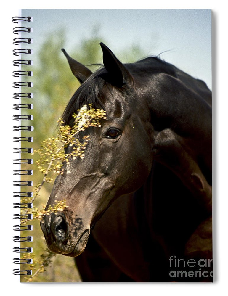 Horse Spiral Notebook featuring the photograph Portrait Of A Thoroughbred by Kathy McClure
