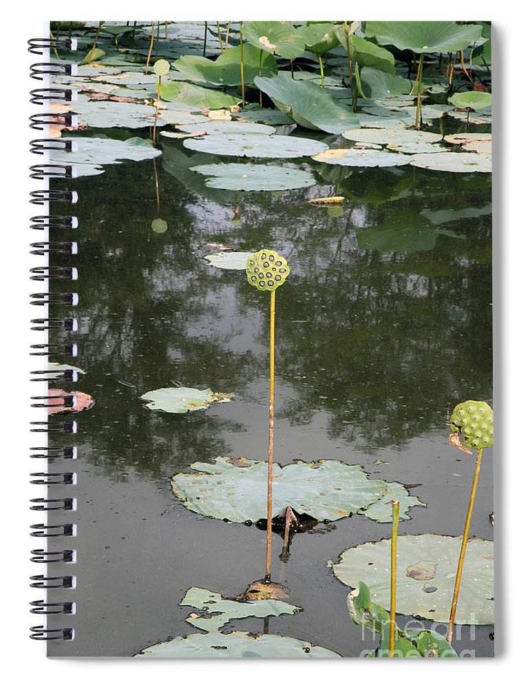 Lotus Spiral Notebook featuring the photograph Post Bloom by Amanda Barcon