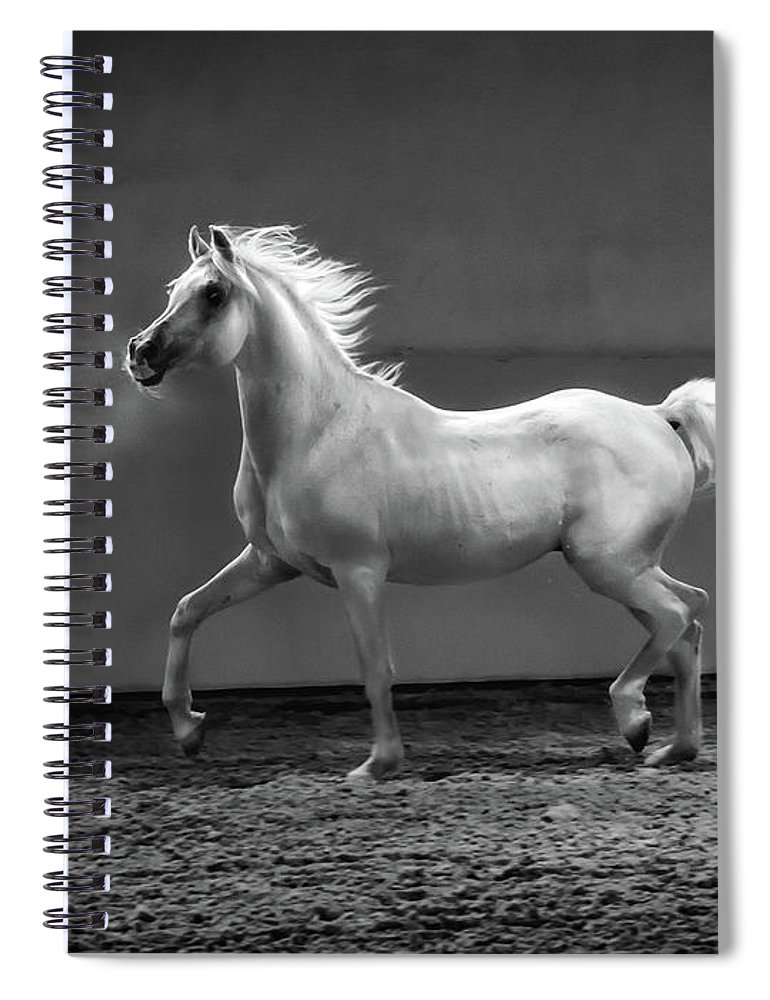 Horse Spiral Notebook featuring the photograph Proud Arabian Horse - Stallion In by Kerrick