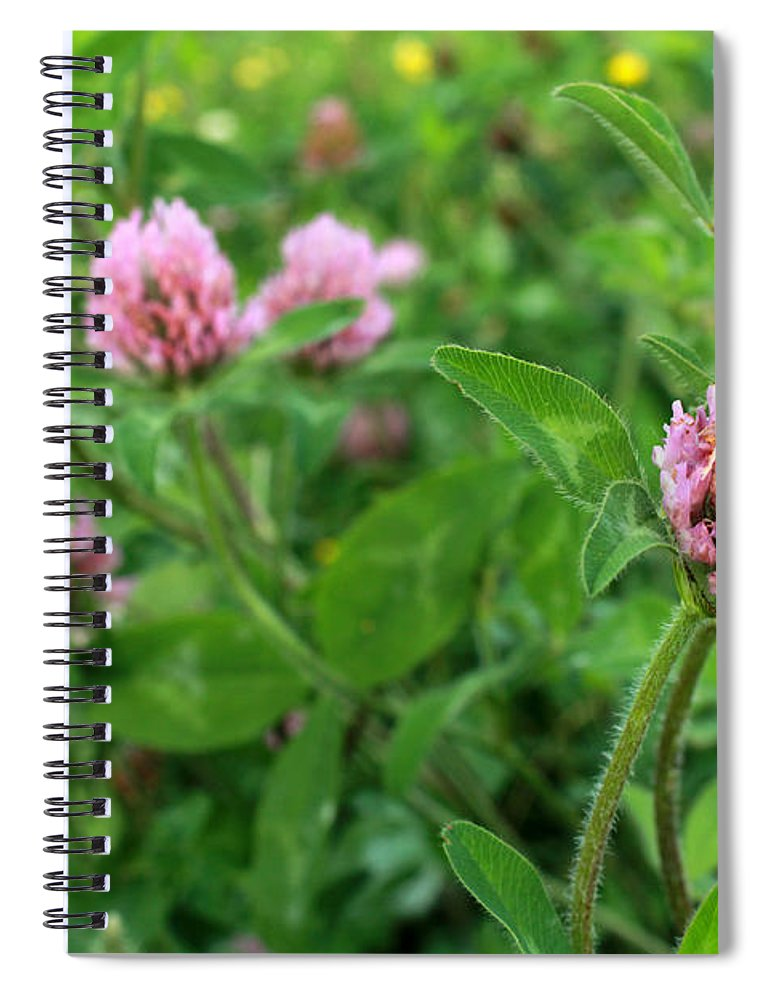 Purple Clover Wild Flower In Midwest United States Meadow Spiral