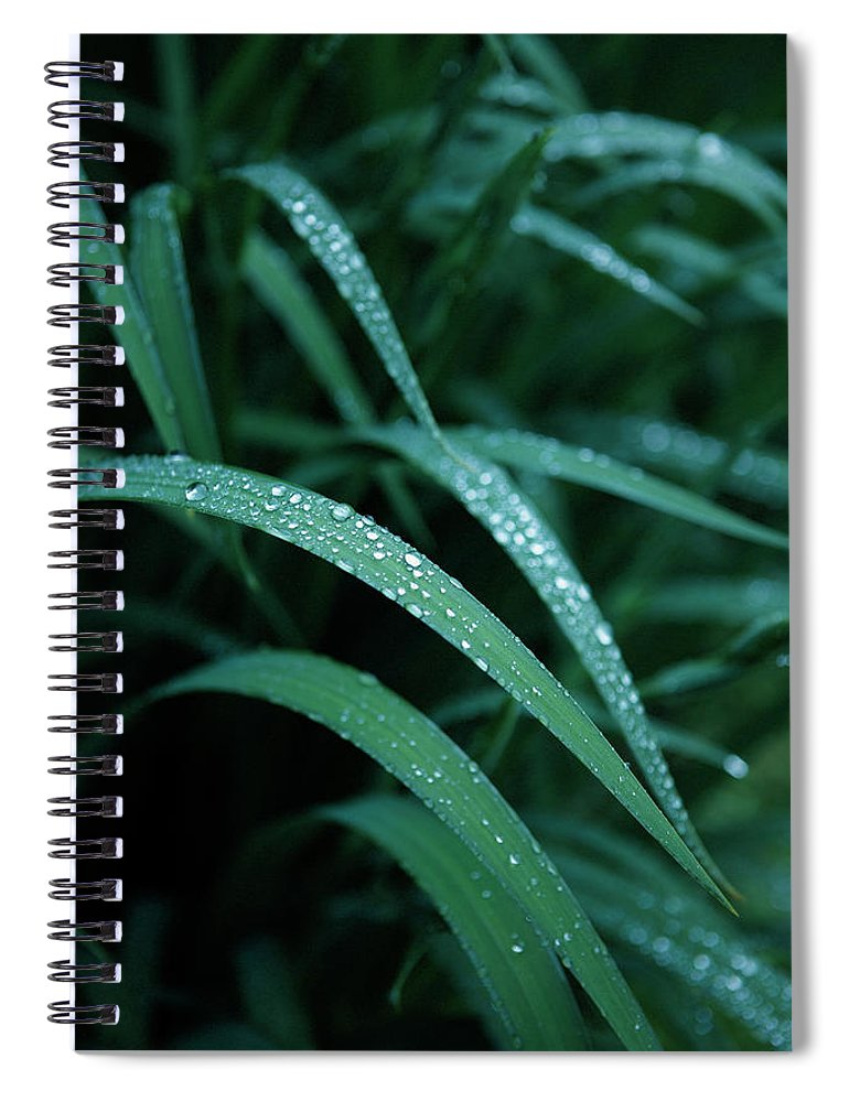 Tranquility Spiral Notebook featuring the photograph Raindrop by Seiji Nakai