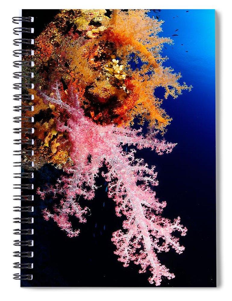 Underwater Spiral Notebook featuring the photograph Red Sea Coral by Iñigo Gutierrez Photo