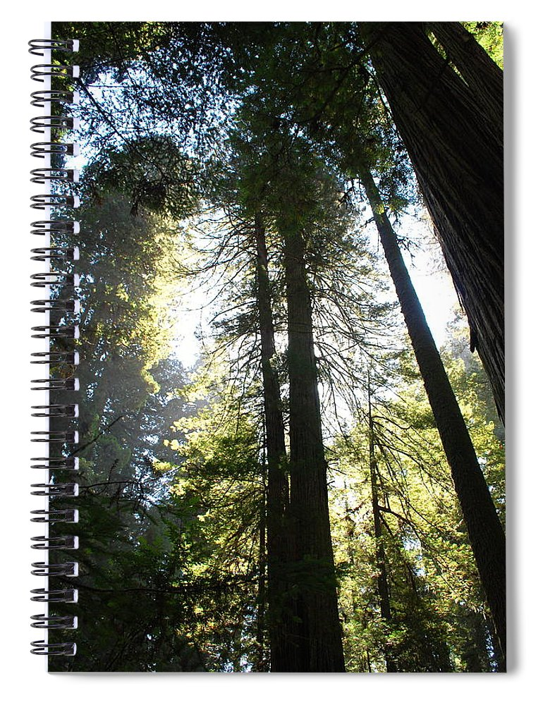 Redwoods Spiral Notebook featuring the photograph Redwoods IIII by Kathy Sampson