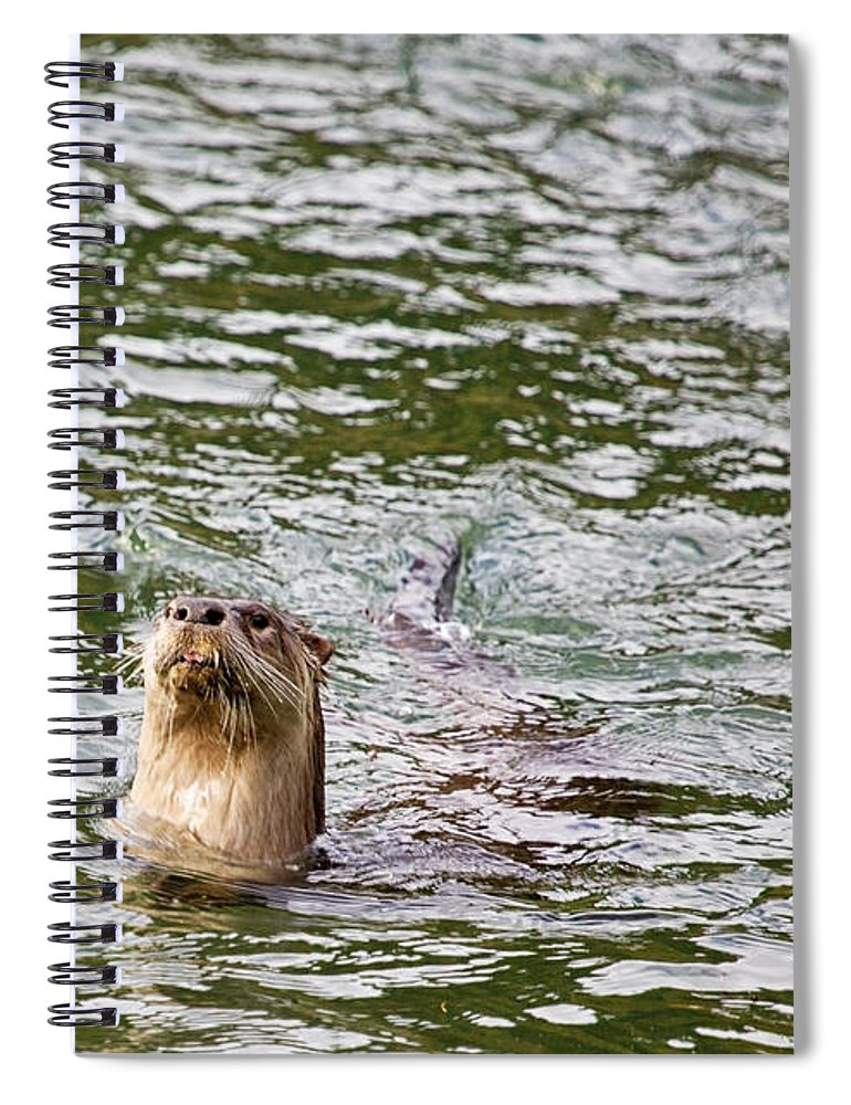 River Otter Spiral Notebook featuring the photograph River Otter Fishing by Belinda Greb