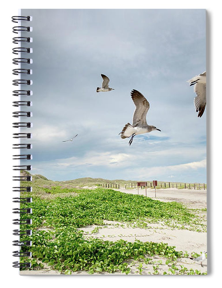 Scenics Spiral Notebook featuring the photograph Seagulls In Flight At North Padre by Olga Melhiser Photography