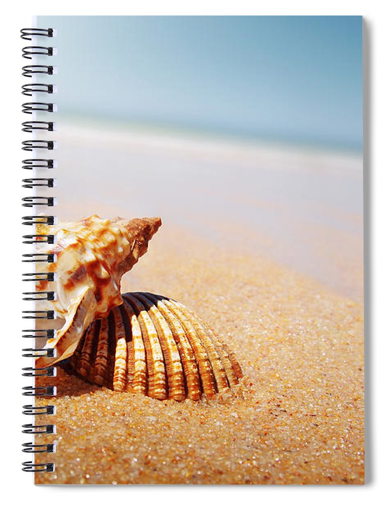 Abstract Spiral Notebook featuring the photograph Seashell And Conch by Carlos Caetano