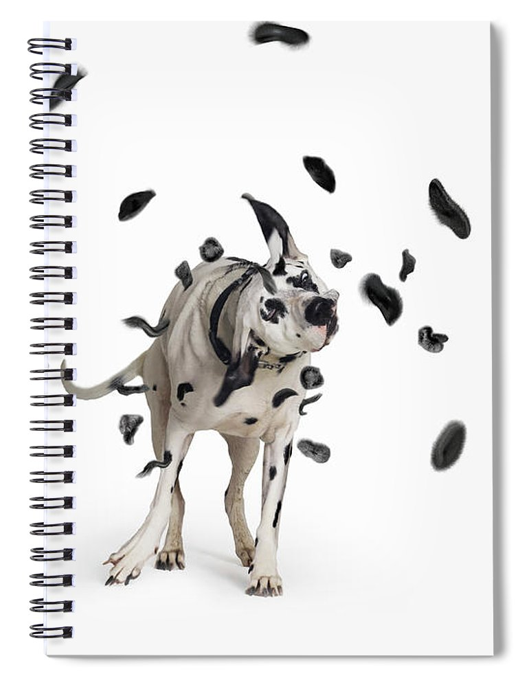 Pets Spiral Notebook featuring the photograph Shake The Spots Off by Gandee Vasan