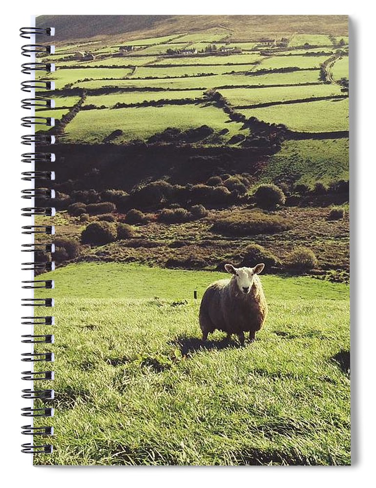 Pets Spiral Notebook featuring the photograph Sheep Standing In Field by Thomas Peham / Eyeem