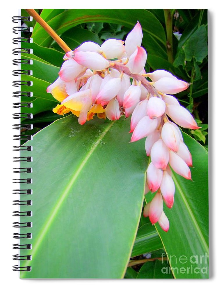Shell Ginger Spiral Notebook featuring the photograph Shell Ginger by Mary Deal