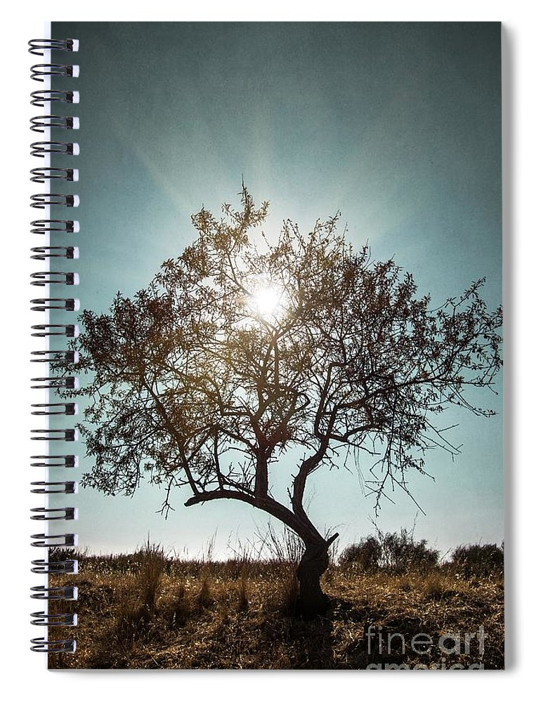 Dark Spiral Notebook featuring the photograph Single Tree by Carlos Caetano
