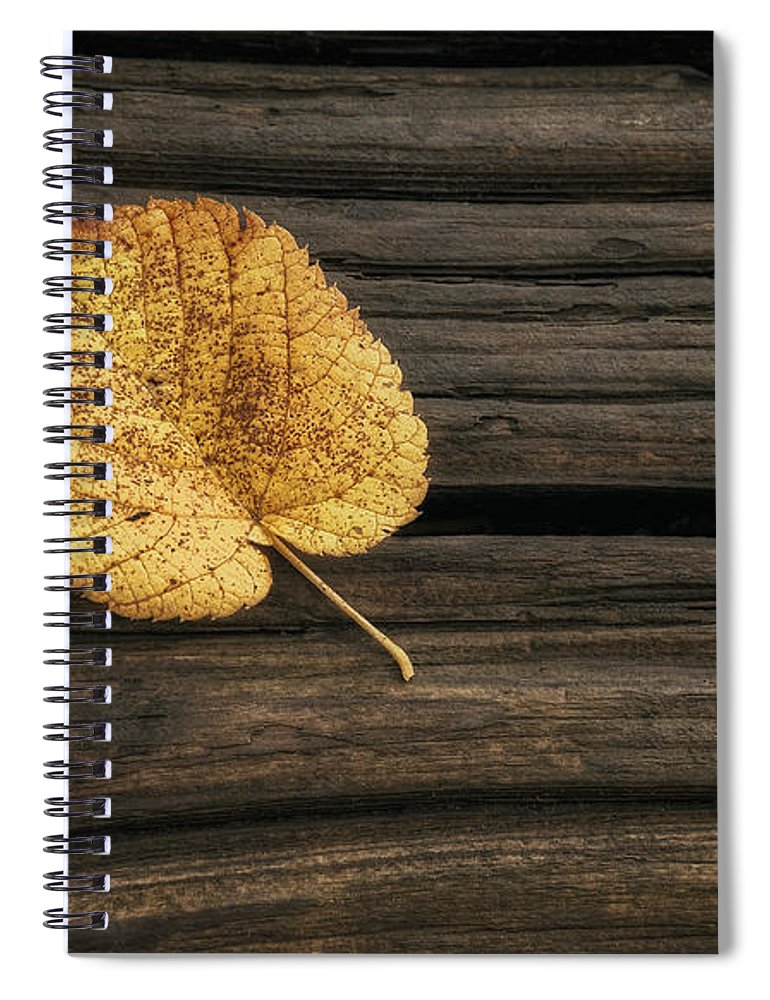 Leaf Spiral Notebook featuring the photograph Single Yellow Birch Leaf by Scott Norris