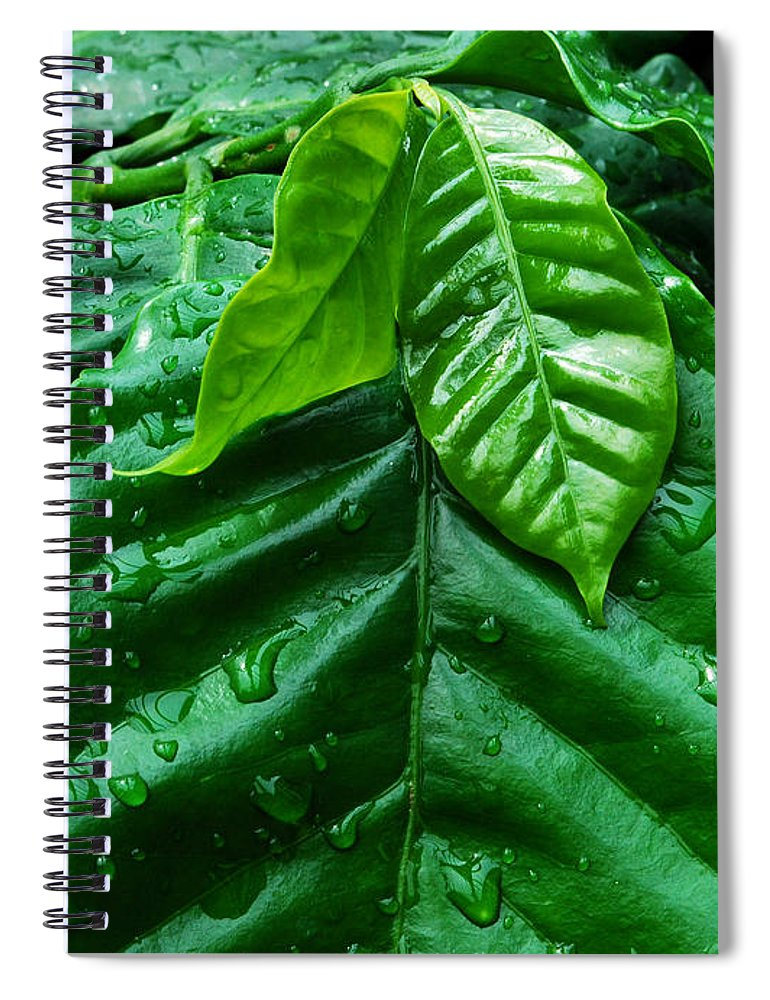 Water Spiral Notebook featuring the photograph Small Leaves With Water Drops by Nancy Mueller